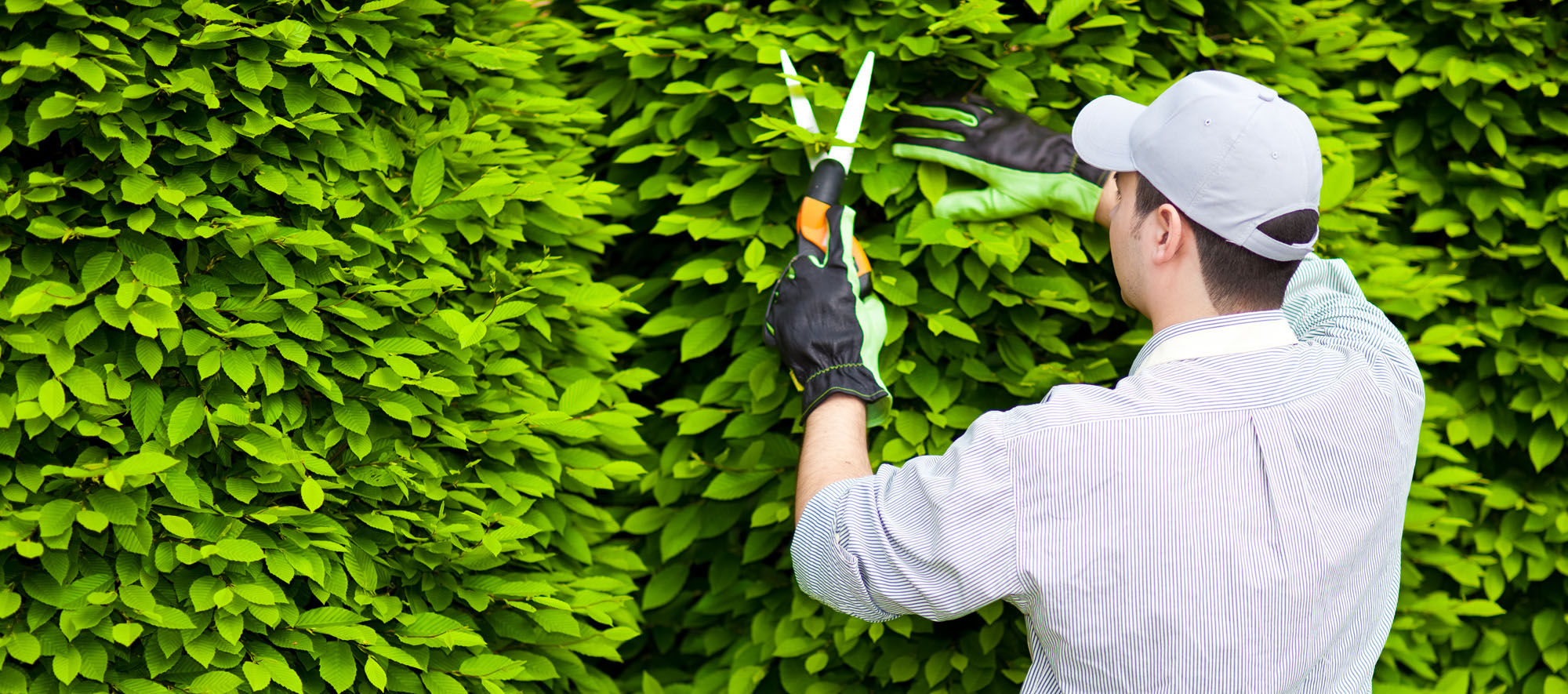 hedge-pruning